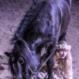 Icelandic Horse Park