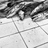 Puerto Mont: Fish Market