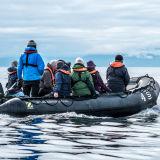 In Search of Humpbacks