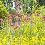Achamore Gardens: Gigha