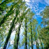 Valdivia: Botanical Gardens