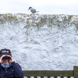 Bird Watching, Farne Islands