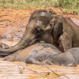 Elephant Transit Home: Udawalawe