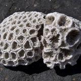 Coral: Winyalkan Island