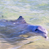 Feeding Time: Bottlenose Dolphins