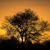 Sunset: Madikwe Game Reserve