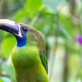 Arenal, Costa Rica