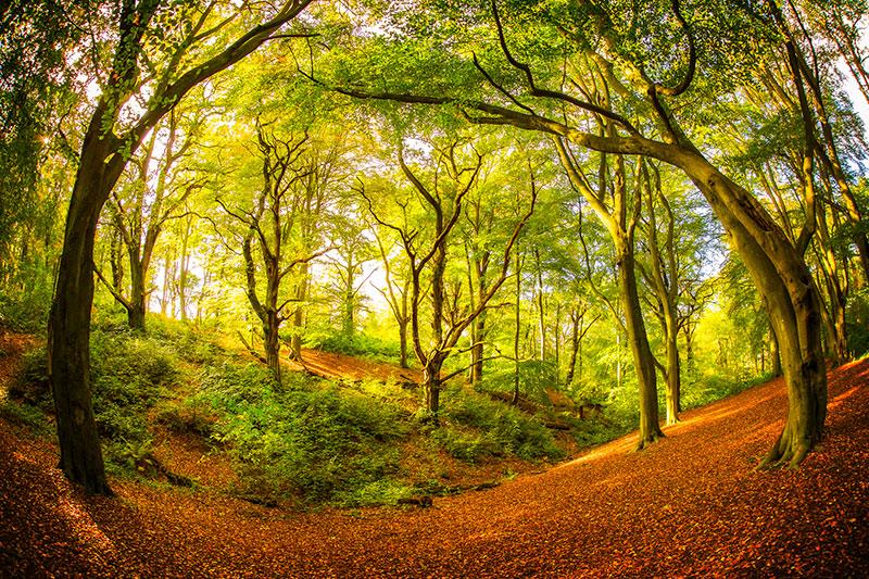 Dodderhill Common Woods