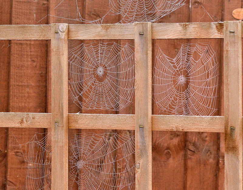 Spider Neighbourhood