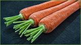 Trio Of Carrots