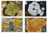 Various Lichen