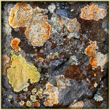 Colours Of Lichens