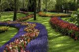 Gardens Of Keukenhof