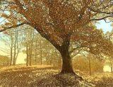 Autumn Glade