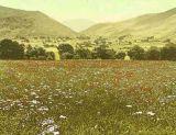Cumbrian Valley