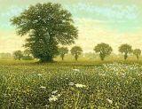 May Fields