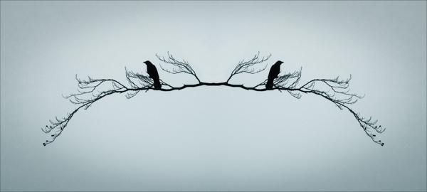 winter bird(s)