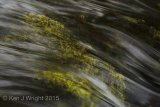 flowing river over moss