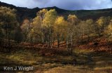 autumn in Borrowdale