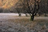 sunlight and frost on Yew Tree Tarn