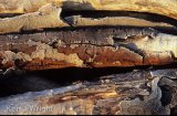 frosted log detail