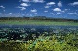 lagoon, Mareeba Wetlands