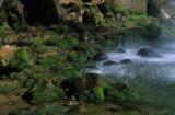 moss at the Taranaki Falls