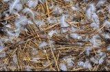 recently abandoned swans nest