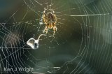 wasp in the web 2