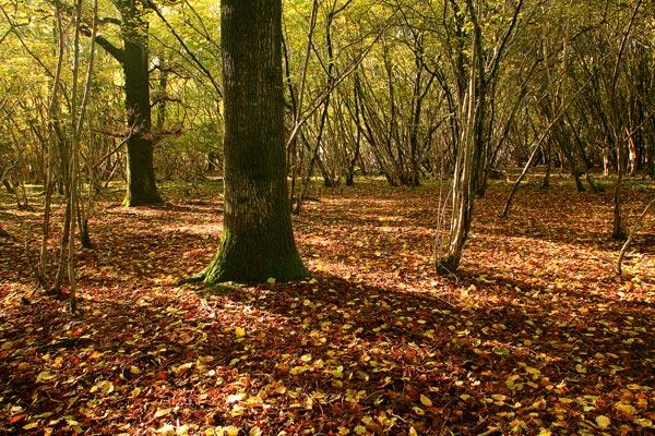 Autumn Garston Wood