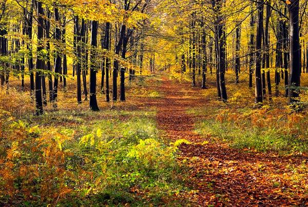Vernditch Autumn Colour