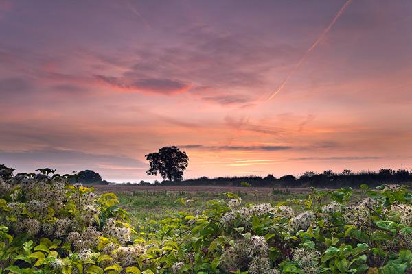 Dawn on the Ox-Drove