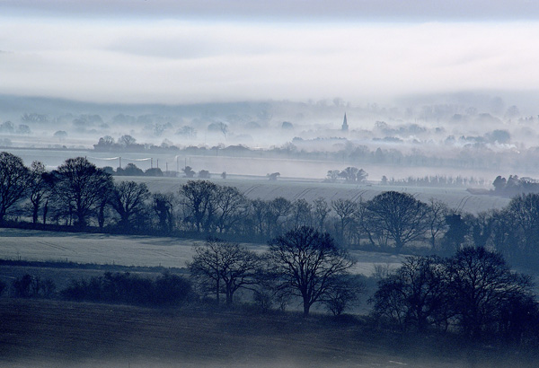 Misty Morning Martin