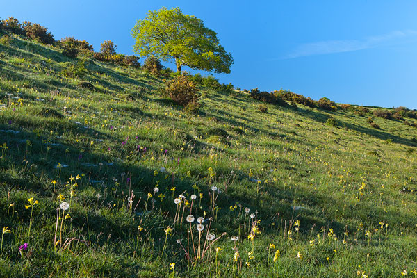 Wildflowers Middleton Down
