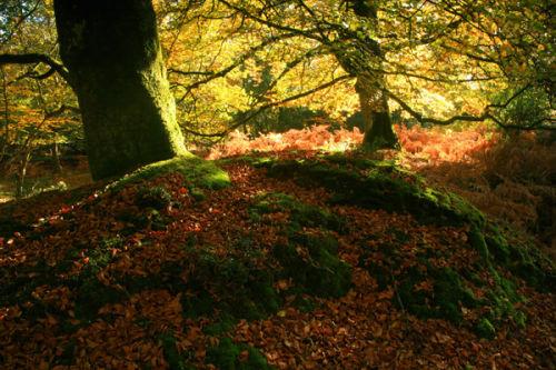 Bramshaw Woods in Autumn