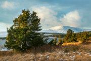 Scots Pines Clatteringshaw