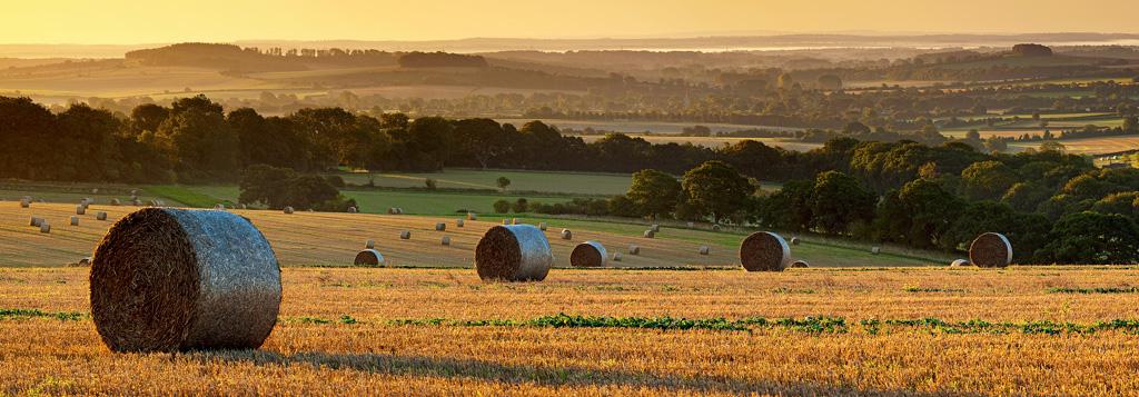 Dawn-after-Harvest