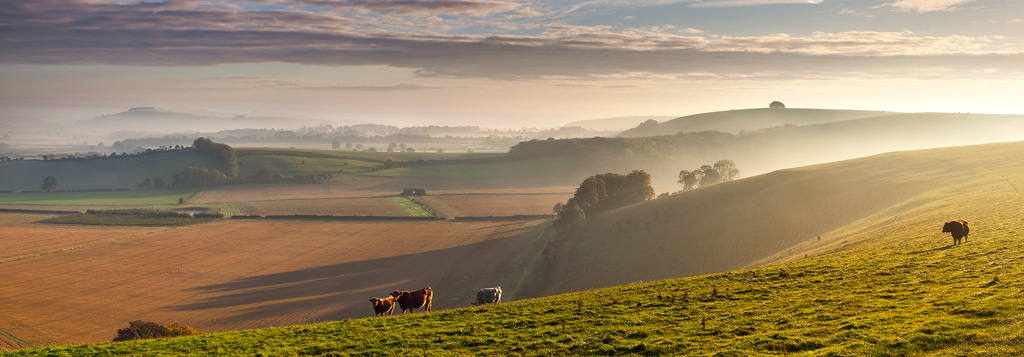 Early-Morning-on-the-Shaftesbury-Road
