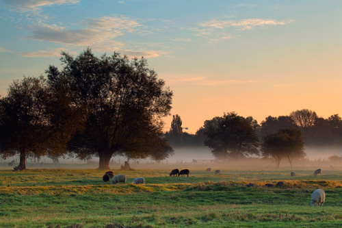Early morning Harnham water meadows