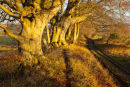 Faulston Drove Sunlight