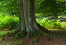 Fluted Beech Trunk Brately Wood
