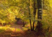 Garston Wood Autumn
