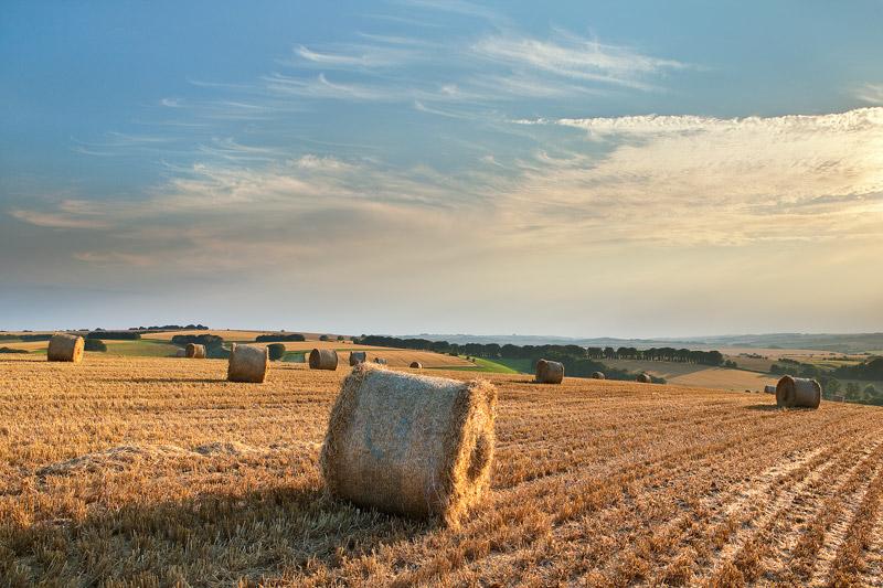 Harvest Knighton Hill