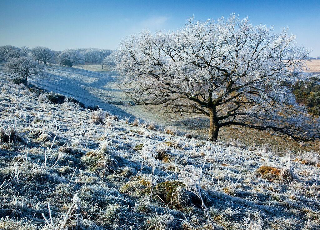 Middleton Down Hoar Frost