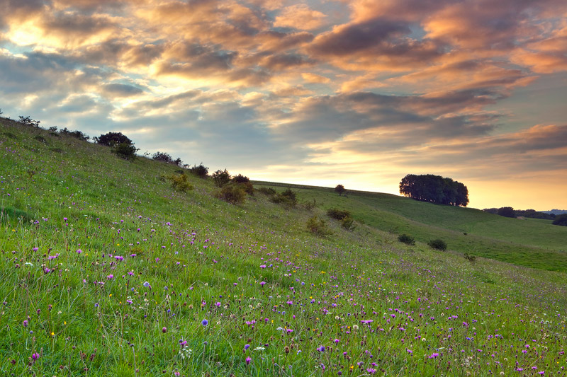 August Evening on Middleton Down