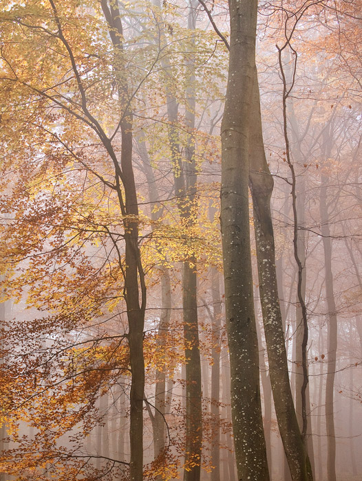 Mist and Autumn Leaves