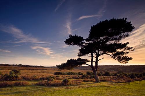 Pine Silhouette Mogshade Hill