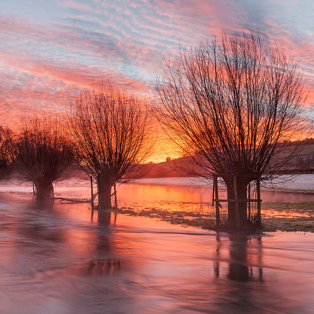 River Ebble at Dawn