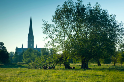Salisbury Cathedral and Willow Tree