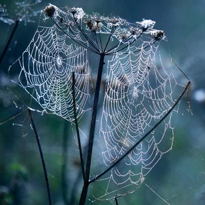 Seedhead and Spiderweb